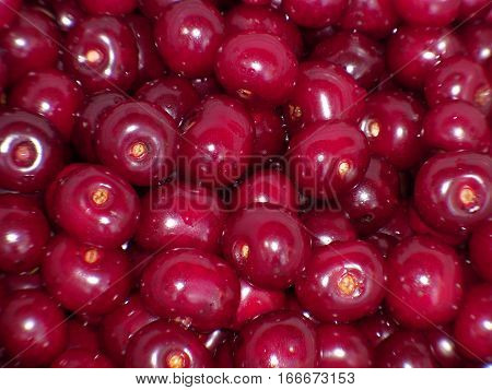 Red cherries in summer is an unforgettable sight. Delicate and fragile ripe cherries are attracted by its red color