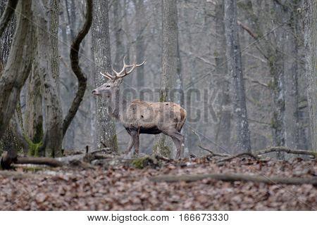 Très joli cerf sauvage en pleine forêt