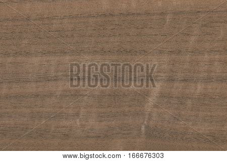 Walnut- stripe (Juglans higra) USA. Showing the wood grain and pattern typical of this tree.