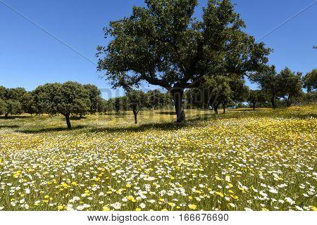 Spring landscape of extremadura landscape near the village of Valencia de Alcantara Caceres province extremadura Spain