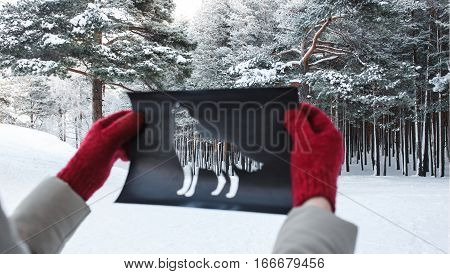 Winter Forest Through Wolf Shape Cut Out from Yellow Paper. Concept of Forest Dwellers.