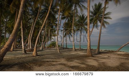 Landscape of beautiful palm grove near of the ocean