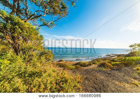 green shore in Malibu in southern California