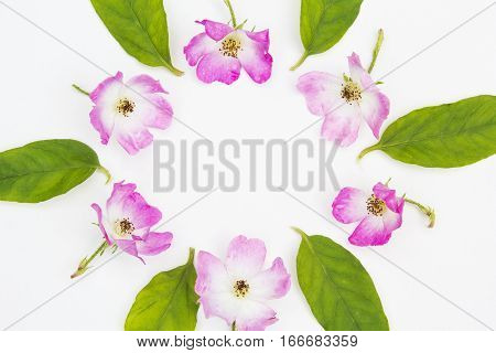 Pink roses in the shape of the circle on white background