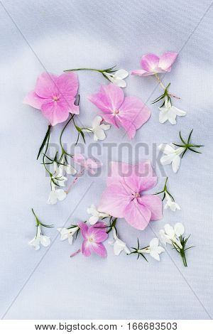 Pink hortensia and white lobelia on fabric background