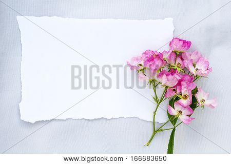 Pink ballerina rose on gray fabric background with white paper