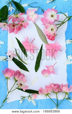 Beautiful pink ballerina roses on blue painted background and white paper.