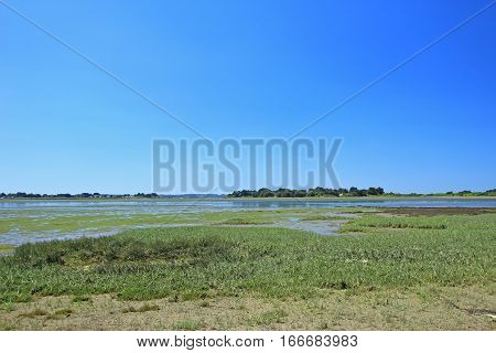 Salt marsh with Salicornia (in the foreground) in the Gulf of Morbihan Brittany France