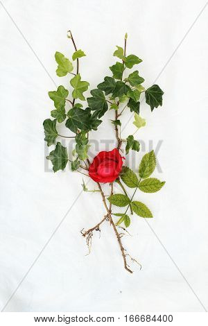 Summer flowers on white fabric with red rose