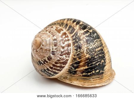 Land snail side view. An isolated snail shell over a white background spiral natural design, brown beige colors.