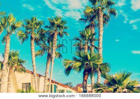 Palm trees in La Jolla in California