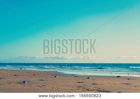 Seagulls by the sea in Newport Beach California