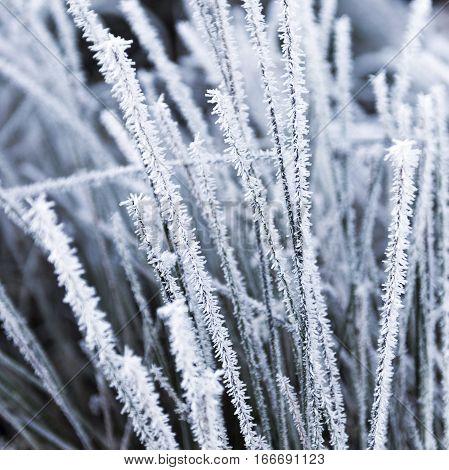 Detail of hoarfrost on grass in winter season