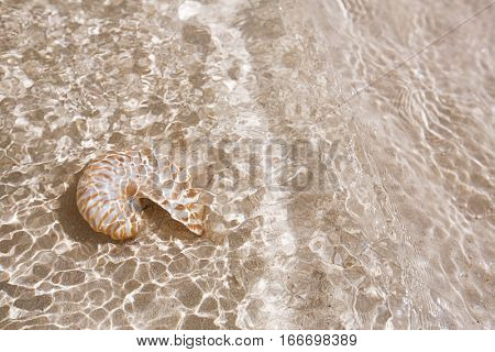 nautilus shell under sea waves on golden sand in the ocean