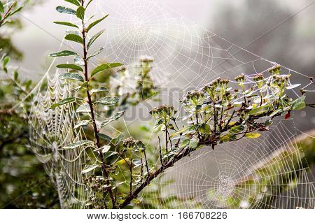 Cobweb on a cold and foggy morning