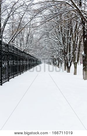 Winter landscape. View on a snowy path leaving into the distance between the black iron fence and alley trees.