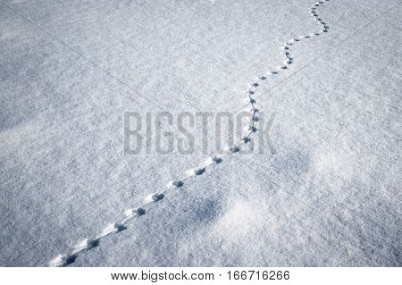 winter background line of small animal tracks in the snow