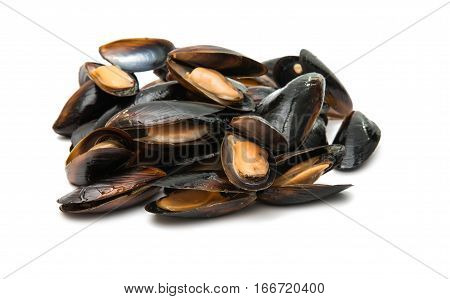 mussels seafood, mollusk on a white background