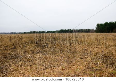 Big Field In And Forest Background