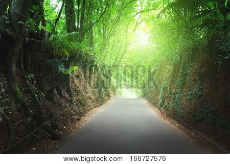 road in jungle of Seychelles