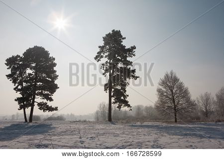 Trees in a winter park with snow on the ground