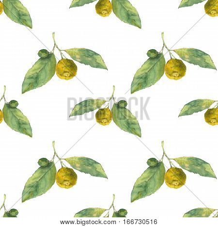 Clementines. Citrus on white background. Seamless watercolor pattern. Could be used for textile or in design