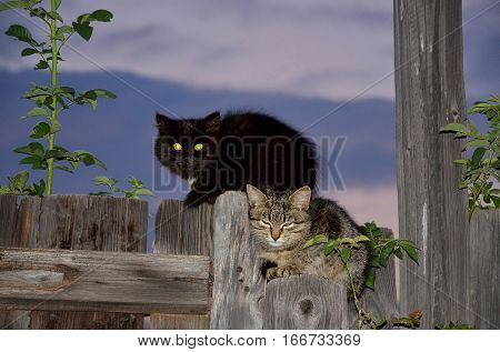 Two kitten, black and speckled, sitting on the fence in the late evening.