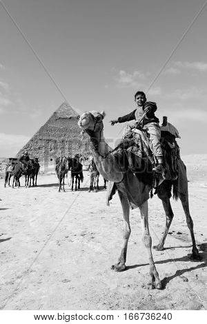 CAIRO, EGYPT - JANUARY 03, 2016: The young camel rider in Giza Pyramids in Cairo, Egypt