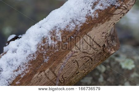 Brown Branch with Melting Snow and Ice