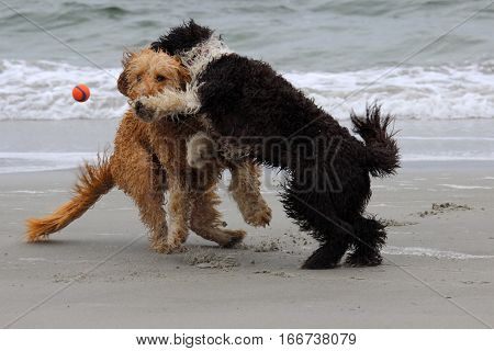 Two dogs playing a game of fetch at the beach with a ball.