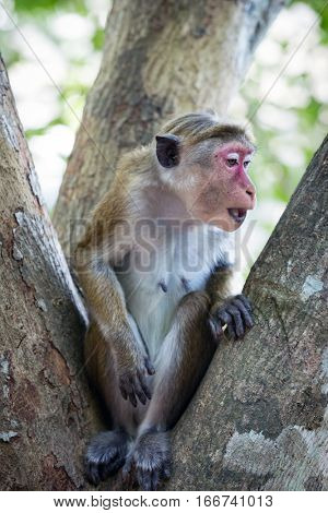 curious monkey on tree in jungle