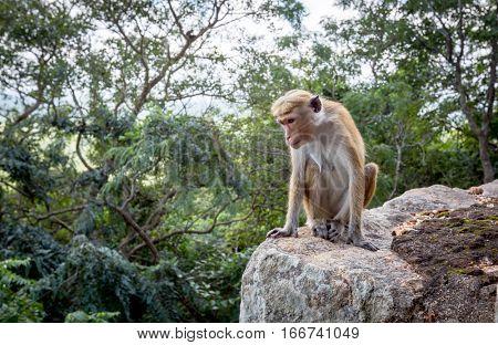 monkey sit on stone in jungle
