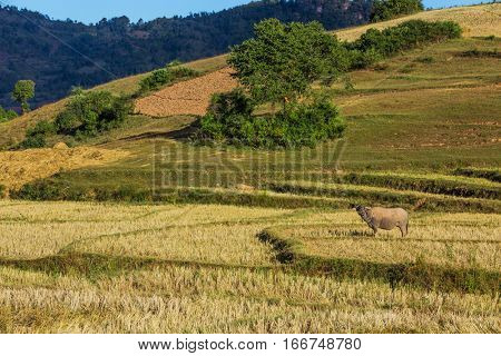 cultivated land fields landscaped near Kalaw Shan state in Myanmar