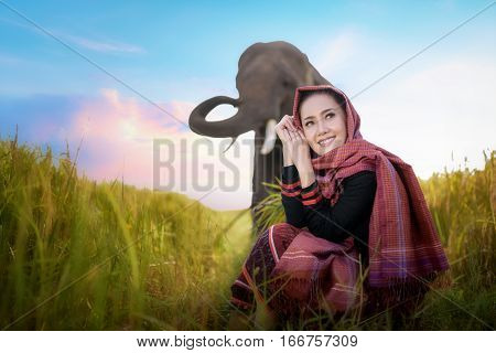 beautiful girl and elephant elephant village Surin Thailand woman harvest rice with elephant in surin Thailand beautiful woman in farmland woman in rice field Thailand woman and elephant harvest in rice field with beautiful sky in Thailand