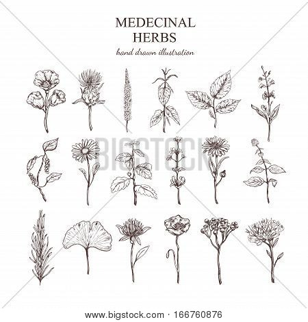 Hand drawn medical herbs collection with natural plants valuable for human health isolated vector illustration