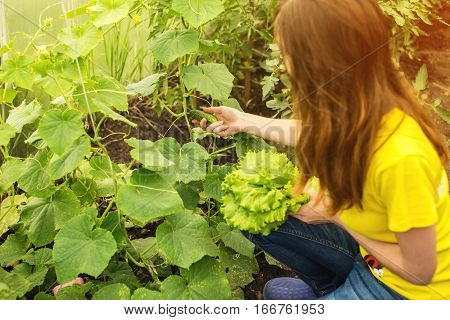 Smiling Girl Picking Cucumber In The Hothouse