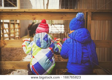 little boy and girl looking at animals in farm or in zoo, kids learning animals