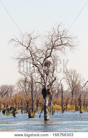 Moremi Game Reserve, Okavango Delta, Botswana Africa