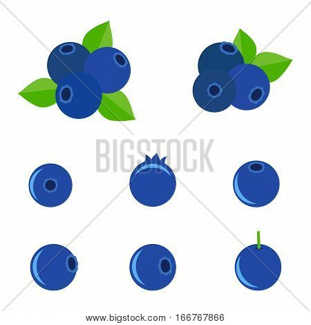 Set of Isolated vector of blueberries. Fresh blueberry fruits with leaves isolated on white background.