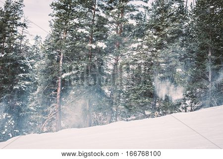 Landscape Coniferous Forest At The Ski Slope In The Mountains.