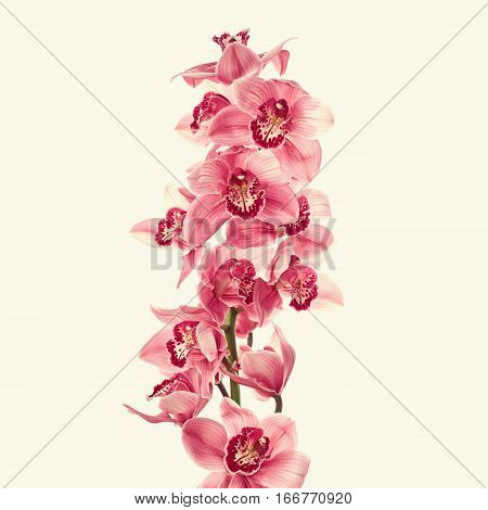 Vintage photo with beautiful pink orchid flowers