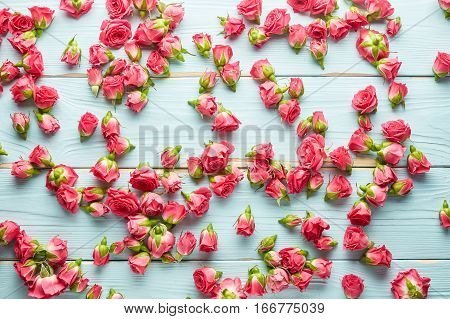 Beautiful pink roses on blue wooden background