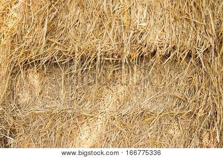 Dry yellow hay for agriculture closeup texture Background