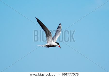 A alone Seagull in the blue sky