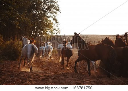 Herd of horses on the nature the setting sun. Animals on field background