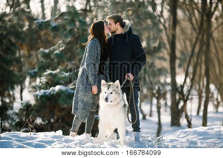 Girl and guy walk with malamute dog in winter forest and kiss. Dog is ahead of them.