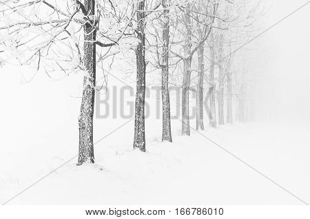 Typical Snowy Landscape During Cold Winter Day In Ore Mountains, Czech Republic.