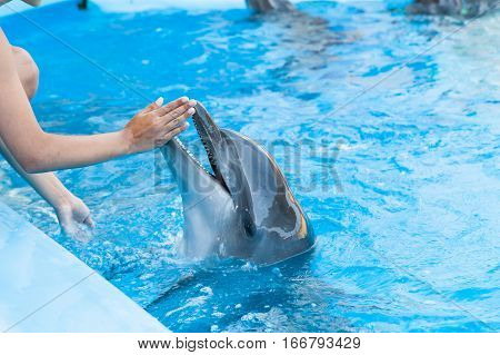 show with dolphins in the Dolphinarium family vacation