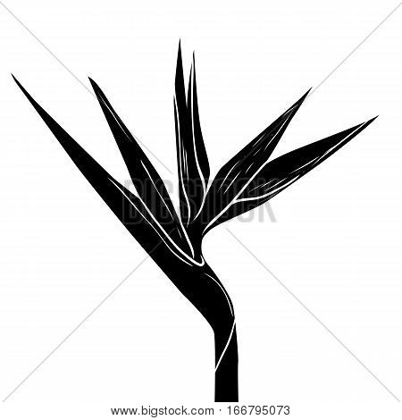 Coloring Bird of Paradise flower, Vector illustration