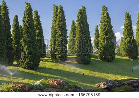 garden with small pine trees;Beautiful spring garden design with conifer trees green grass and eneving sun